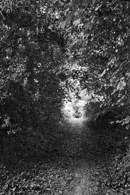tunnel verdure